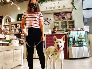 Clinique Vétérinaire Harmonia